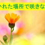 置かれた場所で咲きなさい